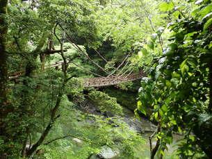 かずら橋の写真素材 [FYI00239682]