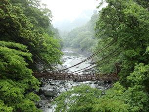かずら橋の写真素材 [FYI00239684]