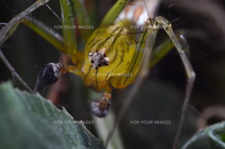 ササグモの写真素材 [FYI00240240]