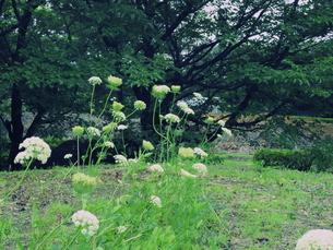 淡い黄緑の茎の花の写真素材 [FYI00240284]