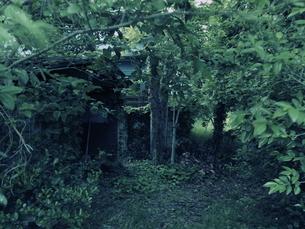 静かな森の写真素材 [FYI00240286]