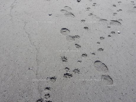 浜辺の人と犬の足跡の写真素材 [FYI00240290]