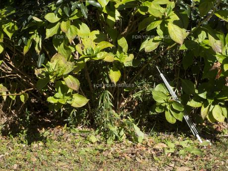 木と傘の骨の写真素材 [FYI00240311]