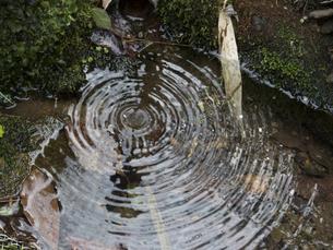 森の中の水の波紋の写真素材 [FYI00240313]