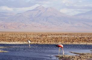 南米チリ北部、アンデス山脈の裾野に広がるアタカマ砂漠にあるアタカマ塩湖とフラミンゴの写真素材 [FYI00240320]