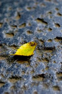 木の葉の写真素材 [FYI00240333]