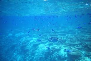インド洋の真珠モルディブの美しいサンゴ礁の海を泳ぐ熱帯の魚たちの写真素材 [FYI00240472]