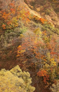 鮮やかな紅葉に染まる信州、長野県小谷村の秋の写真素材 [FYI00240479]