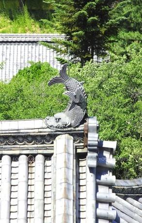 信州の名城、国宝松本城の乾小天守の屋根に載る鯱の写真素材 [FYI00240480]