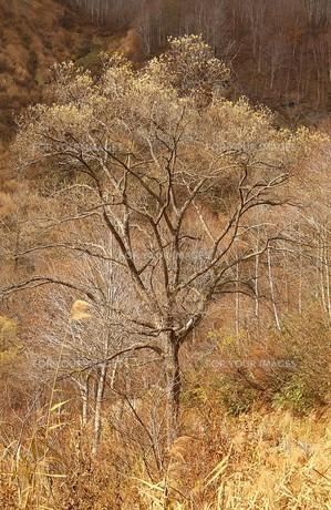 秋深まる信州小谷村の高原の素材 [FYI00240493]