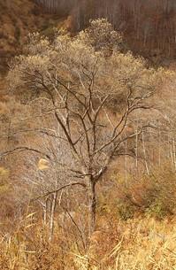 秋深まる信州小谷村の高原の写真素材 [FYI00240493]