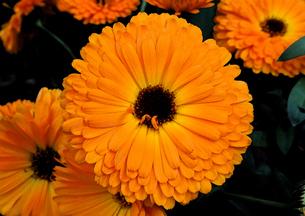 オレンジ色の花の写真素材 [FYI00240575]