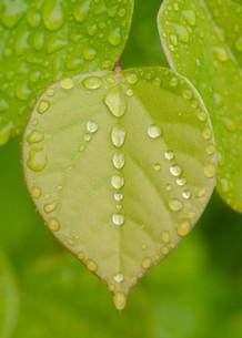 雨だれの素材 [FYI00240615]