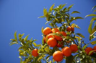 バルセロナのオレンジと青空の素材 [FYI00241541]
