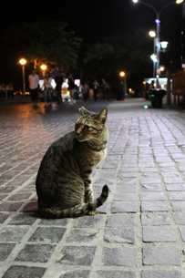 台湾・淡水の猫の写真素材 [FYI00241577]