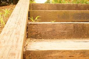 木製の階段の写真素材 [FYI00241591]