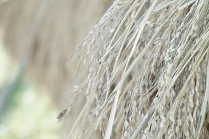 稲木の写真素材 [FYI00242140]