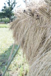 稲木の写真素材 [FYI00242142]