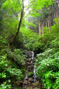 森の小滝の写真素材 [FYI00242371]
