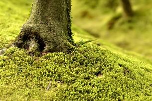 苔庭の写真素材 [FYI00242426]