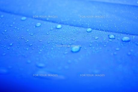 青い雨の写真素材 [FYI00242431]