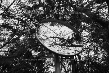 木とミラーの写真素材 [FYI00242470]