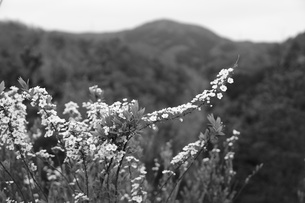 モノクロの草花の素材 [FYI00242472]