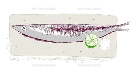秋刀魚の写真素材 [FYI00242670]