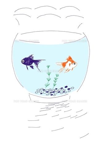 金魚鉢の写真素材 [FYI00242672]