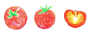 トマトの写真素材 [FYI00242679]