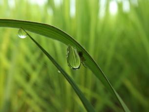 蜘蛛の巣に捕らえられた水滴の写真素材 [FYI00242729]