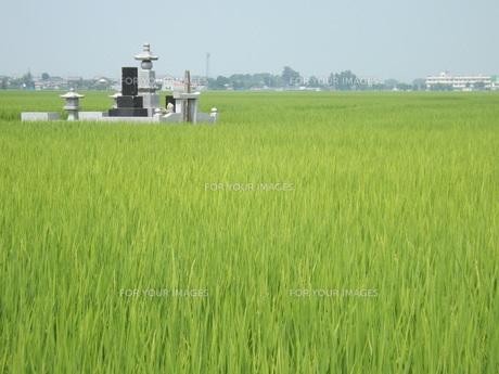 水田に浮かぶ軍艦墓地の写真素材 [FYI00242750]