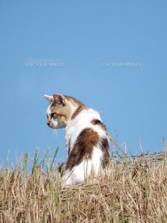 初秋を遊ぶ野良猫の写真素材 [FYI00242893]