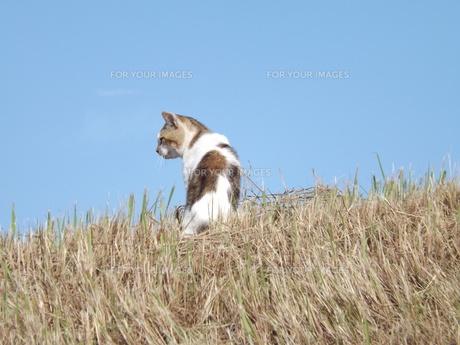 初秋を遊ぶ野良猫の写真素材 [FYI00242898]