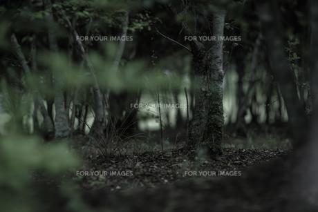 森の素材 [FYI00243077]