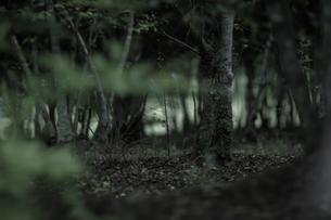 森の写真素材 [FYI00243077]