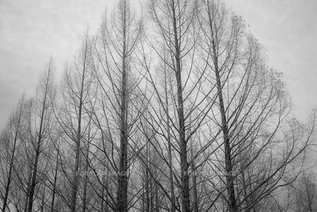 木々の素材 [FYI00243082]