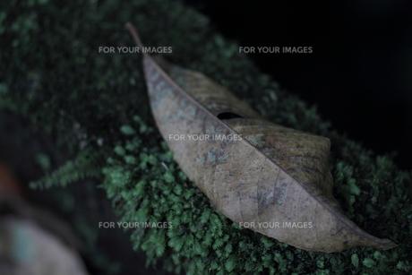 枯れ葉の素材 [FYI00243083]