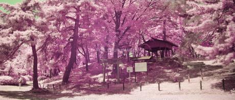 城山公園の生い茂った木立にたたずむ鳥居と社  遠景の素材 [FYI00243116]
