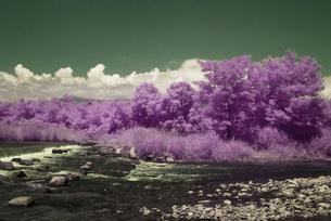 真夏の河原の写真素材 [FYI00243131]