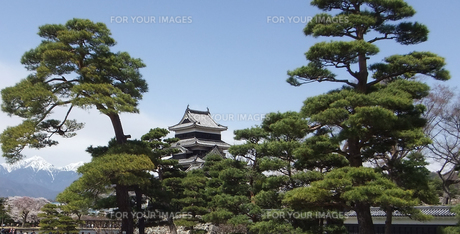 国宝 松本城-1の写真素材 [FYI00243133]