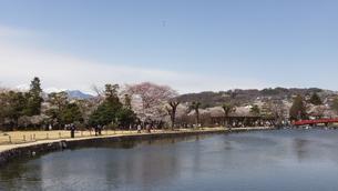 国宝 松本城公園内堀と遠方に北アルプスの写真素材 [FYI00243142]