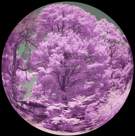 大木を望むの素材 [FYI00243157]