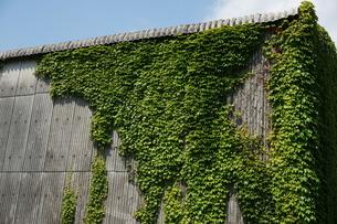 蔦に覆われた倉庫の写真素材 [FYI00243174]
