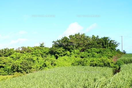 宮古島のサトウキビ畑と空の素材 [FYI00243236]