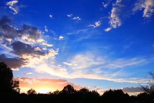アリゾナの森の夜明けの写真素材 [FYI00243270]