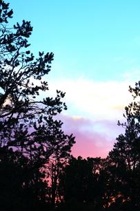 夕暮れのグラデーションと木のシルエットの素材 [FYI00243275]