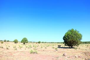 アリゾナの大地と木と子牛の素材 [FYI00243276]