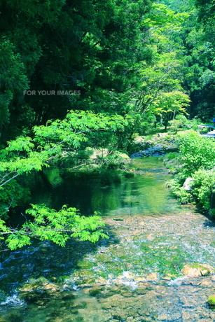 山口県の秋芳洞の外の川の素材 [FYI00243277]
