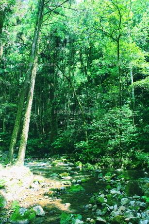 山口県の秋芳洞の近辺の川の素材 [FYI00243279]